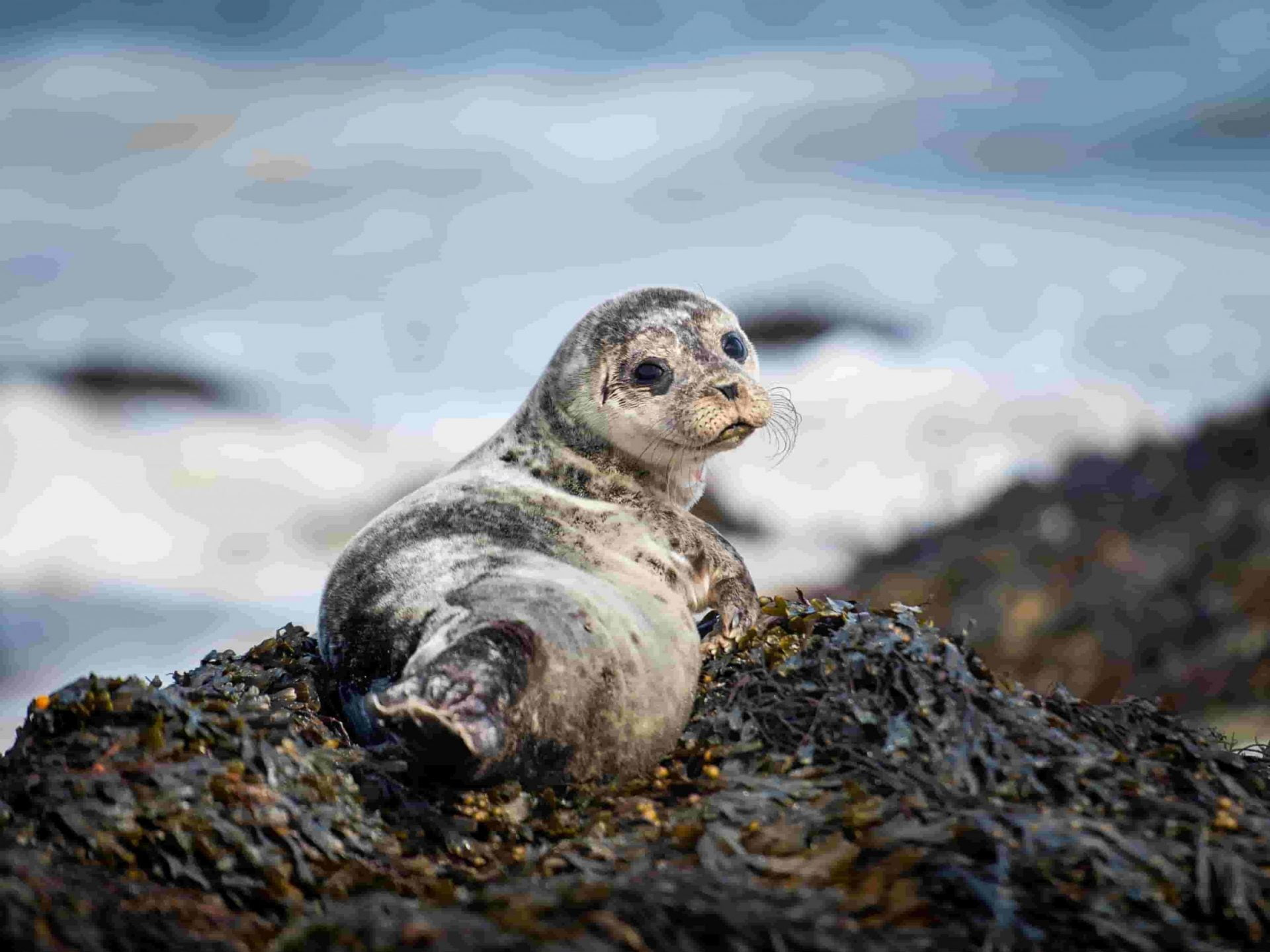 Seals need a rest as well scaled