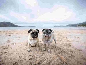 Dogs love Scotland's beaches