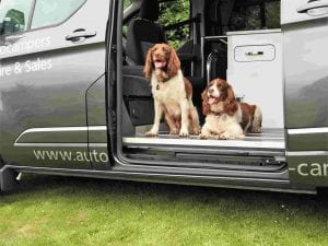 Dogs on a campervan holiday