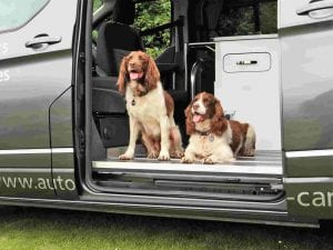 dogs on a campervan holiday2